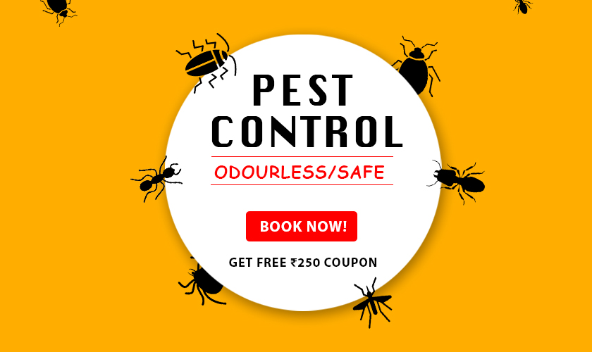 Pest Control Savings - Free Coupon Worth Rs.250