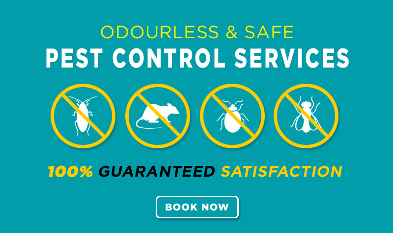 Pest Control - 100% Satisfaction Guaranteed
